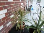 My last 2 plants