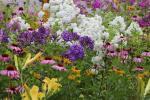 Flowers in the garden...