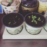cilantro and basil